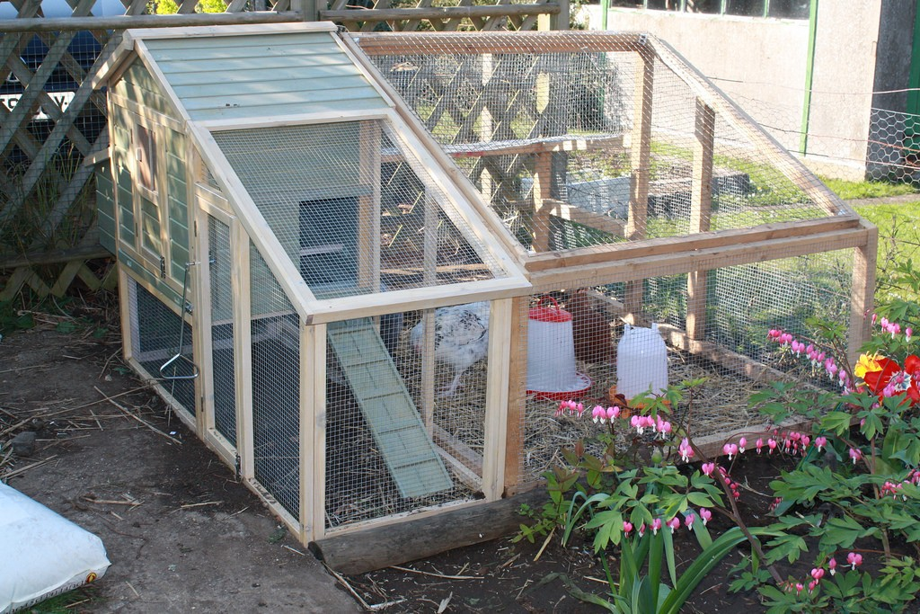 chicken coop cost how much do chickens cost a start up guide for novices 2165